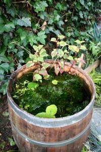 buitenton met water en planten