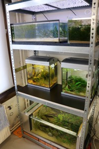 huisvesting met aquariums op