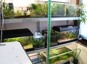 huisvesting met veel aquariums op