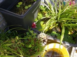 buitenbakken voor endlers met bloemen