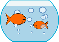 opstarten aquarium bokaal