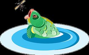 opstarten aquarium vis eet