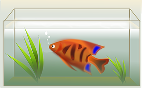 opstarten aquarium kleine aq