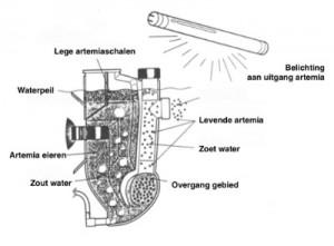 nauplistar gebruik van verlichting artemia